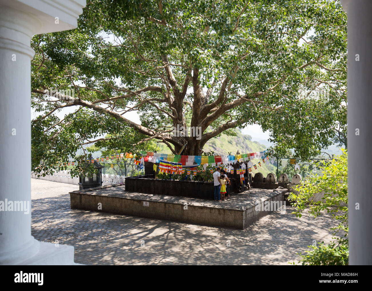 Tourists praying at Bodhi tree decorated with buddhist praying flags, Dambulla, Sri Lanka, Asia. Stock Photo
