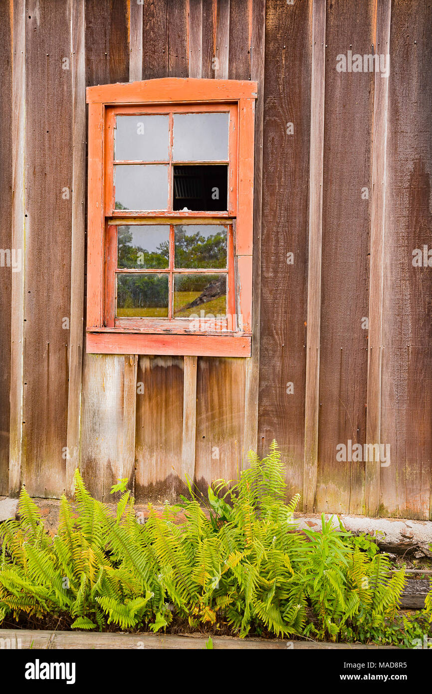 Ferns below a broken window on the side of the RW Meyer Sugar Mill Museum in Kualapuu, Molokai, Hawaii. This is listed on the National Register of His Stock Photo