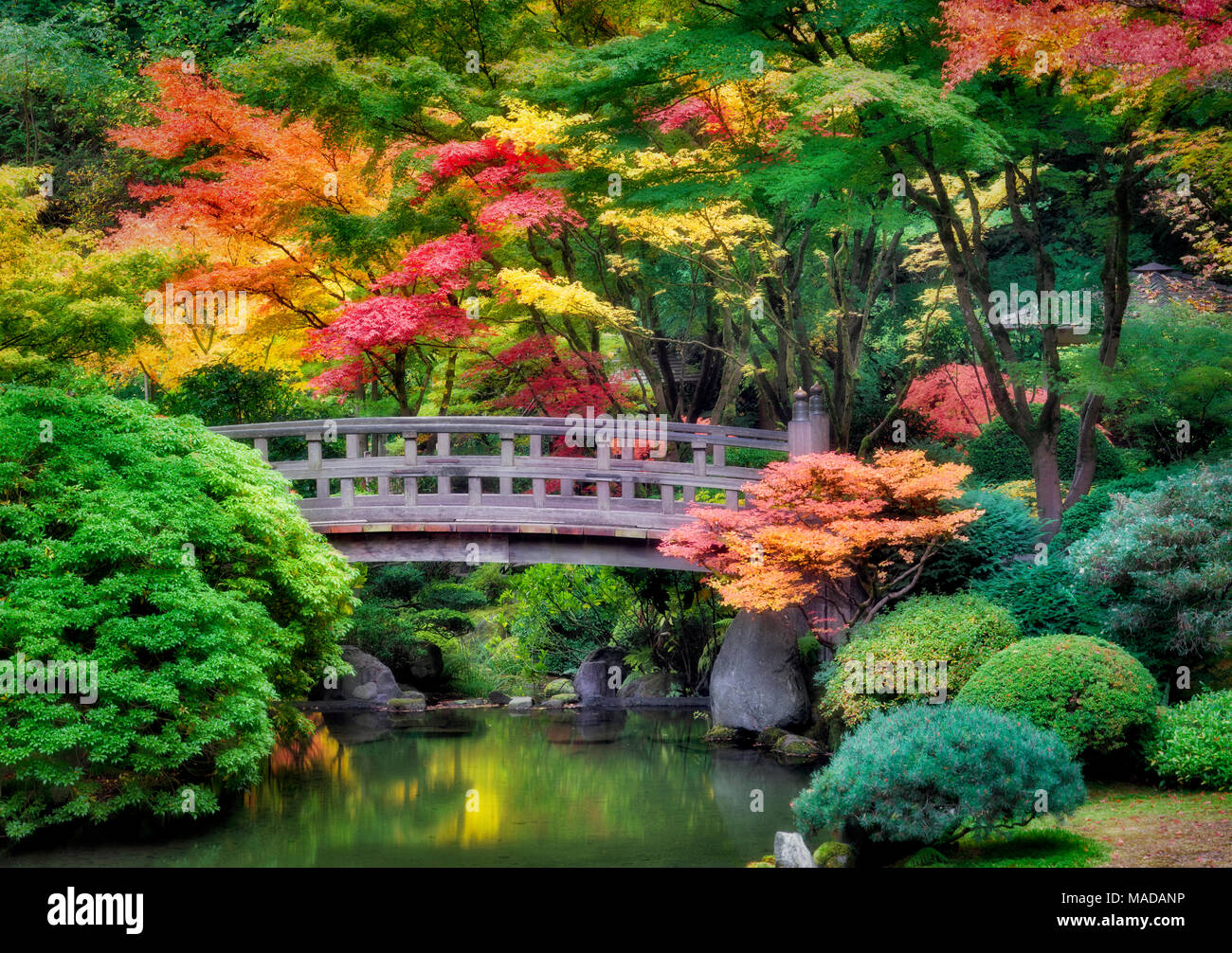Portland Japanese Gardens With Bridge And Fall Colors Oregon