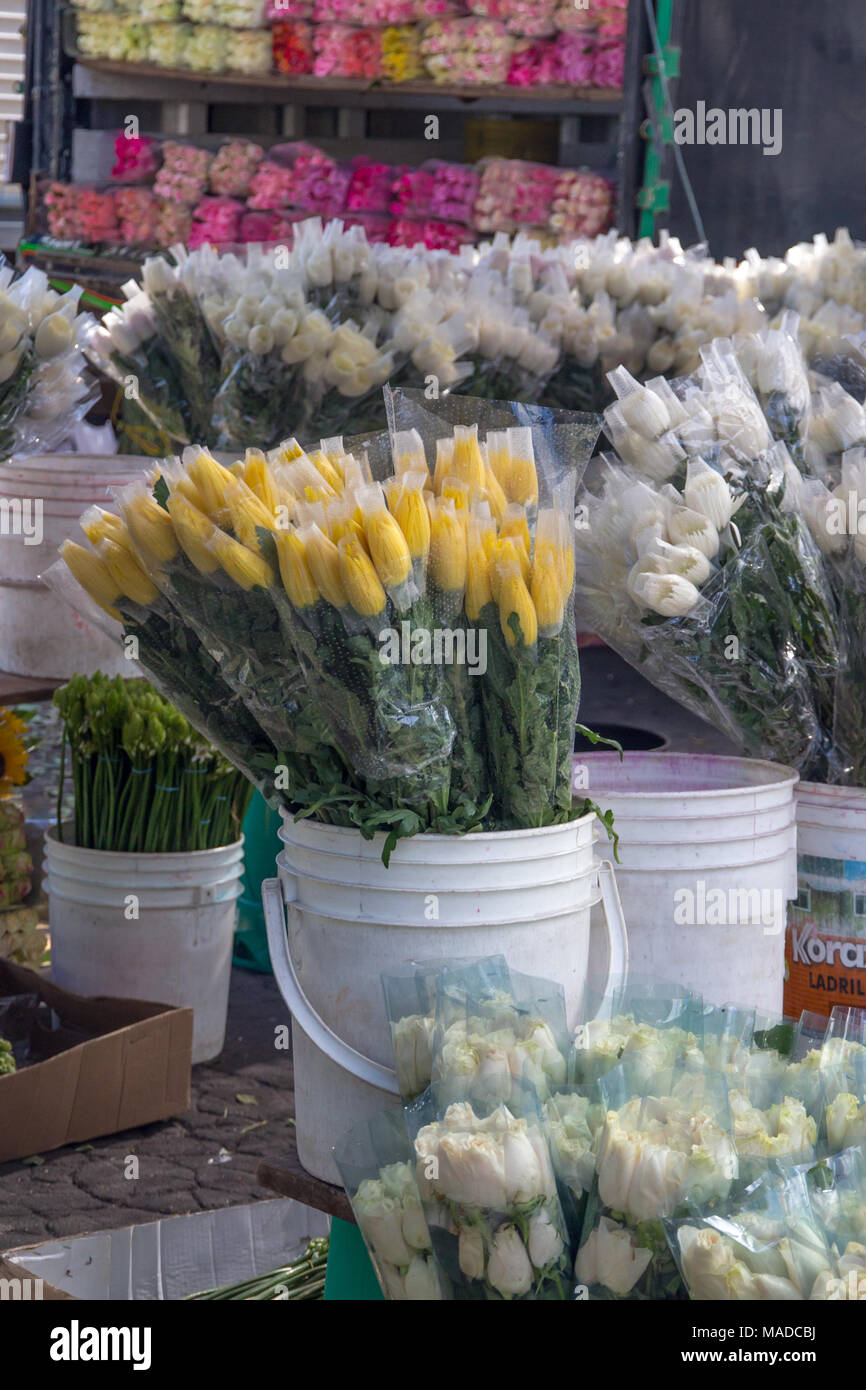 White plastic bucket with bouquets of yellow tulips stands out white plastic bucket with bouquets of yellow tulips stands out amoung other buckets of white tulips more pinks and reds on a truck behind mightylinksfo