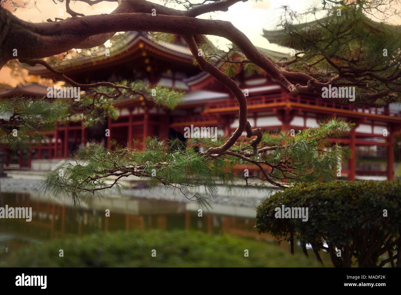 Jodo-shiki garden with a pond in front of Phoenix Hall, Hoodo, of Byodo-in in a beautiful sunrise scenery with pine tree branches in the foreground, B - Stock Image