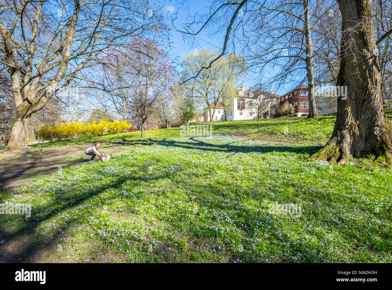 People enjoy a walk and spring atmosphere in the city park along Motala river in Norrkoping, Sweden. - Stock Image