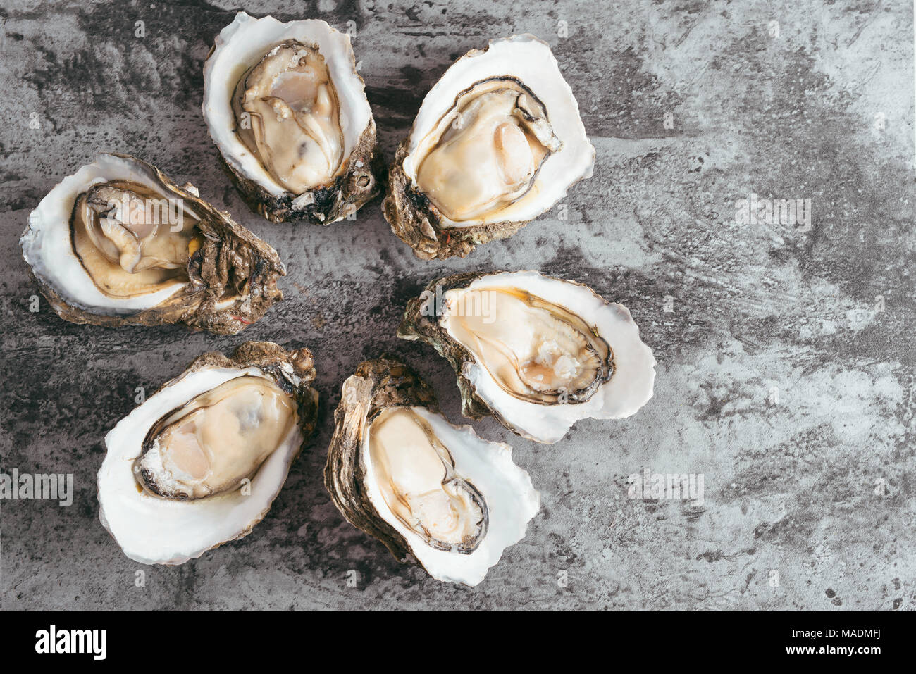 Opened Oysters on black metal rustic background Stock Photo