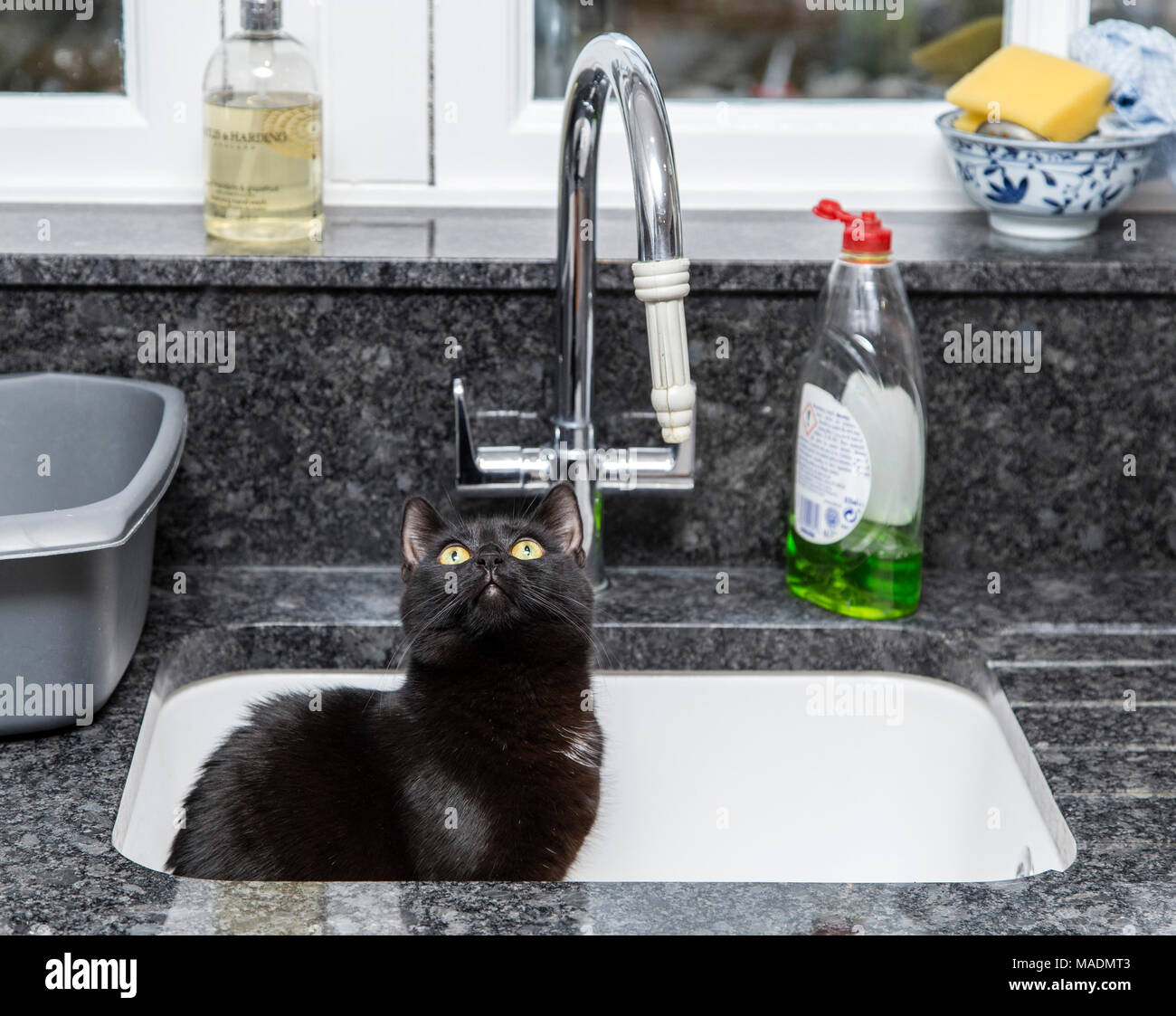 Black cat sat in a kitchen sink - Stock Image