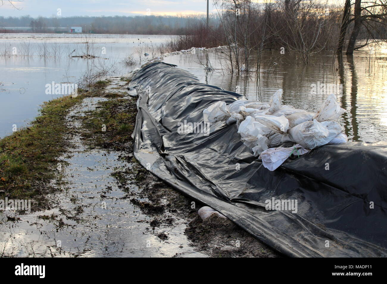 Sandbags flood protection barely holding strong river back during flood surrounded with grass and dried tree branches at sunset Stock Photo