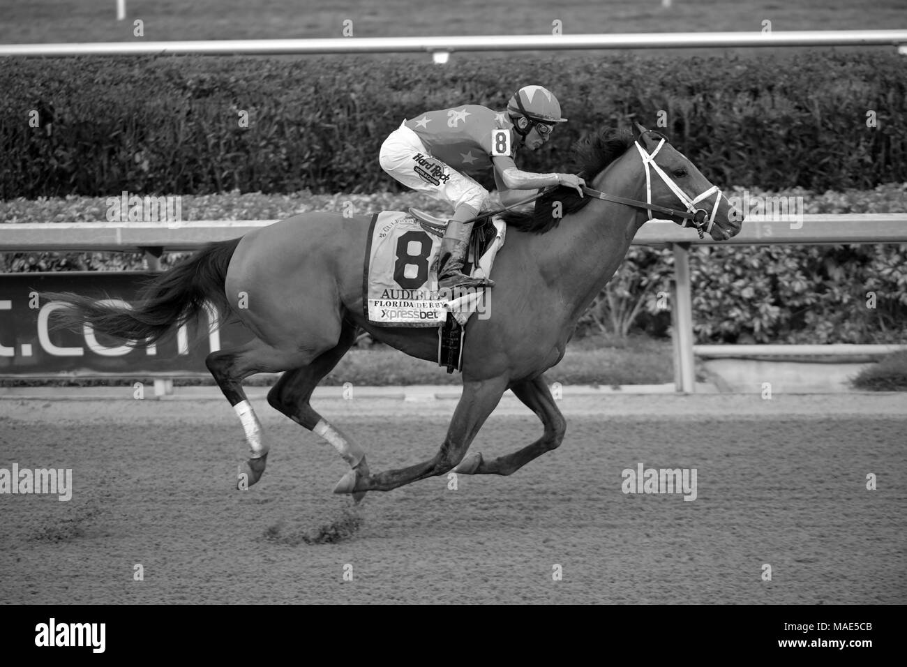 HALLANDALE, FL - MARCH 31: Audible ran away in the stretch to win the Grade 1 Florida Derby with Jockey John Velazquez. It marks the fifth Florida Derby win for trainer Todd Pletcher, who won both the Florida and Kentucky Derbies last year with Always Dreaming at Gulfstream Park on March 31, 2018 in Hallandale, Florida   People:  Audible, John Velazquez Credit: Storms Media Group/Alamy Live News - Stock Image