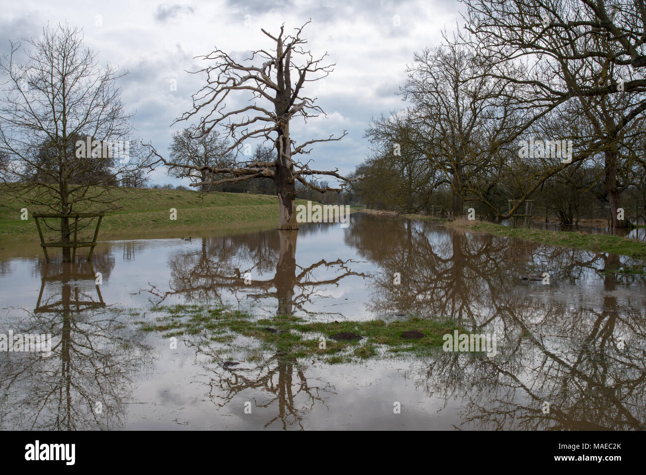 flooded park in the UK with trees partially submerged under water and nice reflections with stormy skies in background - Stock Image