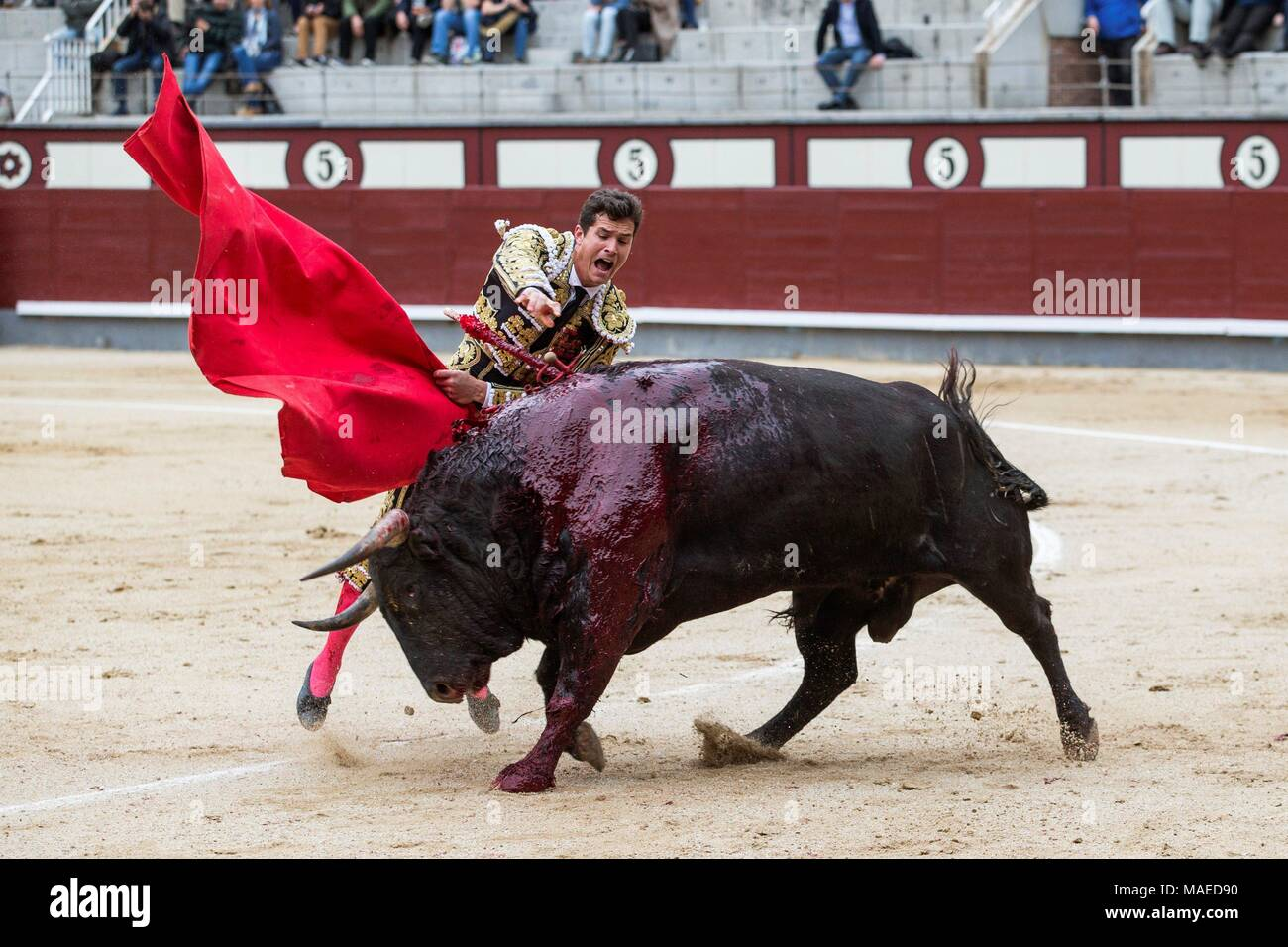 Spanish bullfigther Daniel Luque fights with his first bull