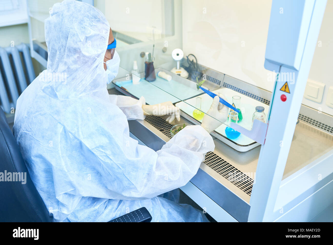 Biologist using leaves in chemical research - Stock Image