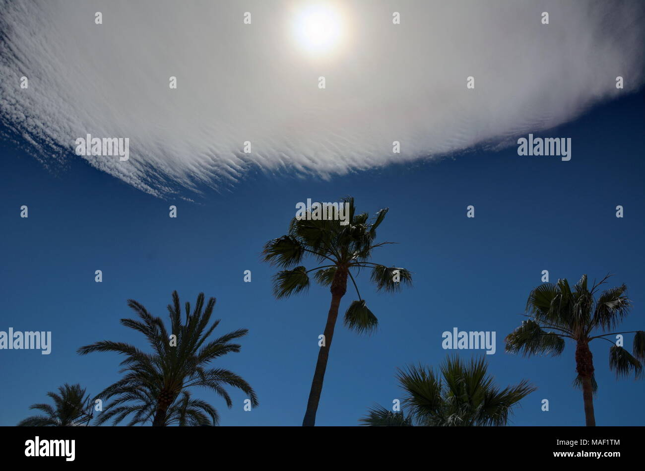 Palm trees silhouetted against a blue sky with an unusual cloud formation and a hazy sun. - Stock Image