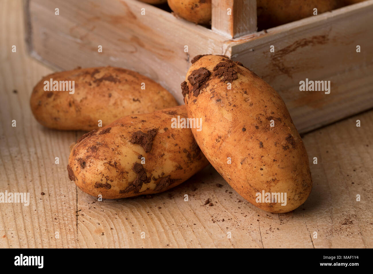 Fresh picked raw whole Diamant potatoes from Cyprus - Stock Image