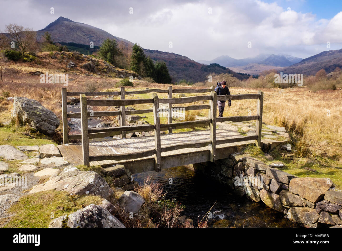 Hiker on a country walk approaching wooden footbridge crossing a stream on a footpath in Snowdonia National Park. Capel Curig Conwy Wales UK Britain - Stock Image