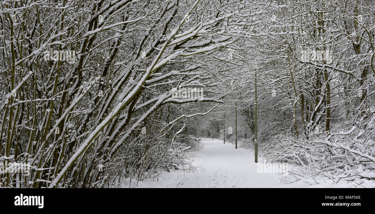 Snow covered footpath at Anton Lakes Nature Reserve in Andover, Hampshire, England - Stock Image