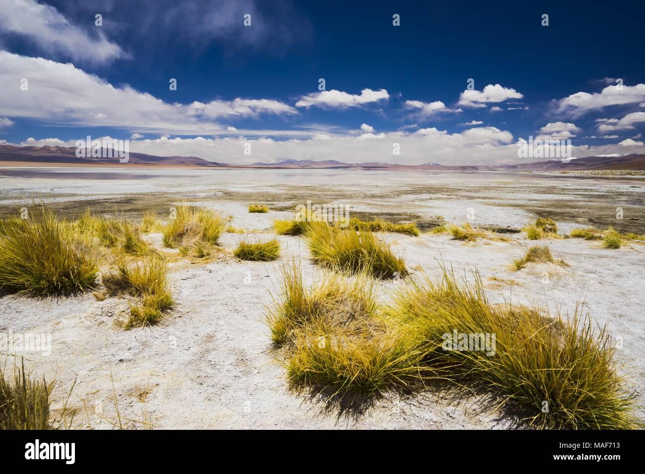 Suedamerika, Bolivien, Potosi, Sol de Mañana - Stock Image