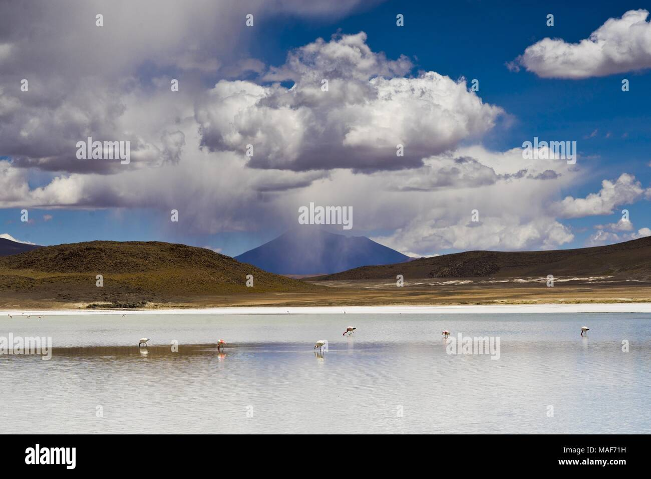 Altiplano Lagoon in Bolivia, Southamerica - Stock Image