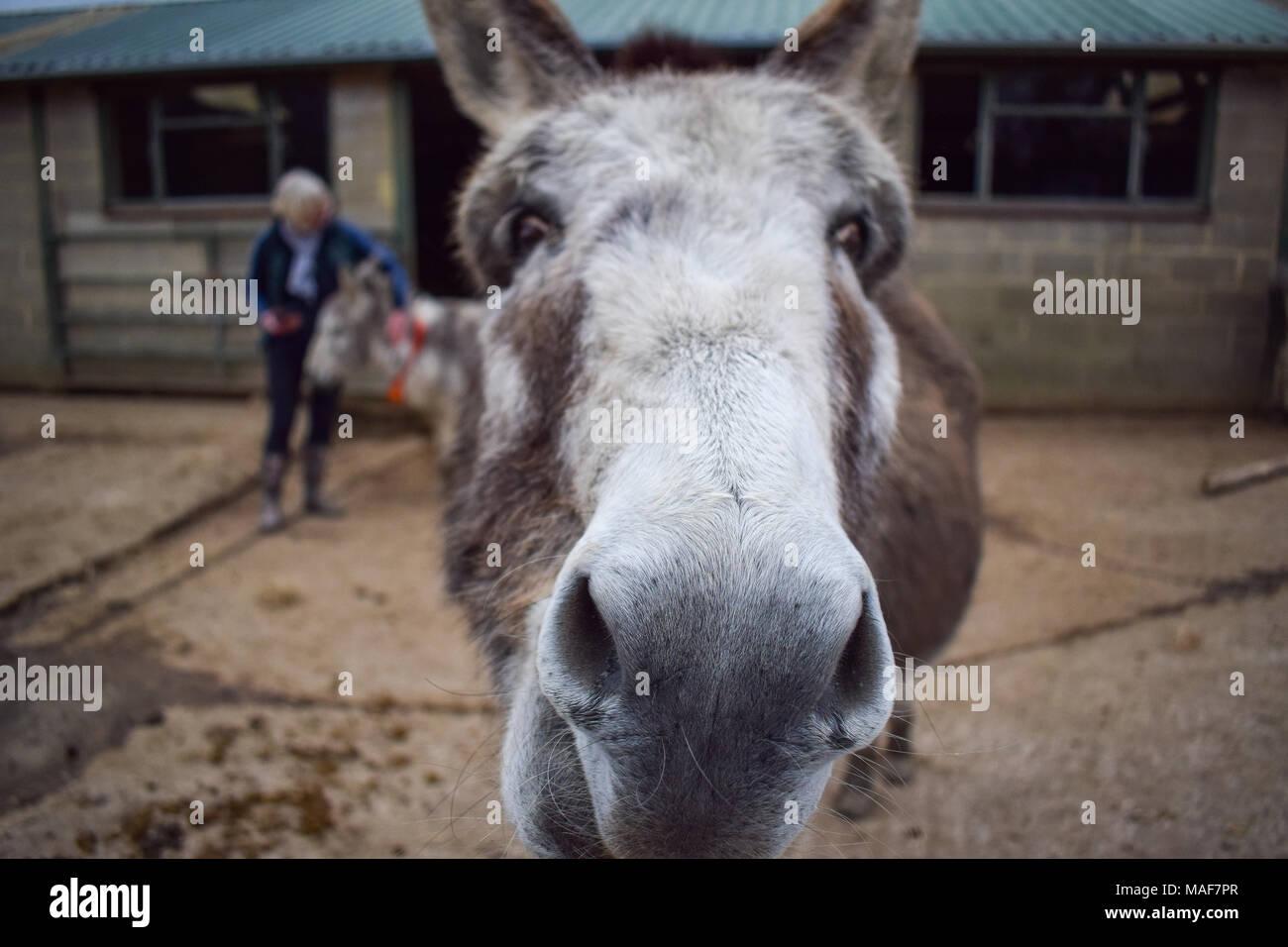 Donkey close up - Stock Image