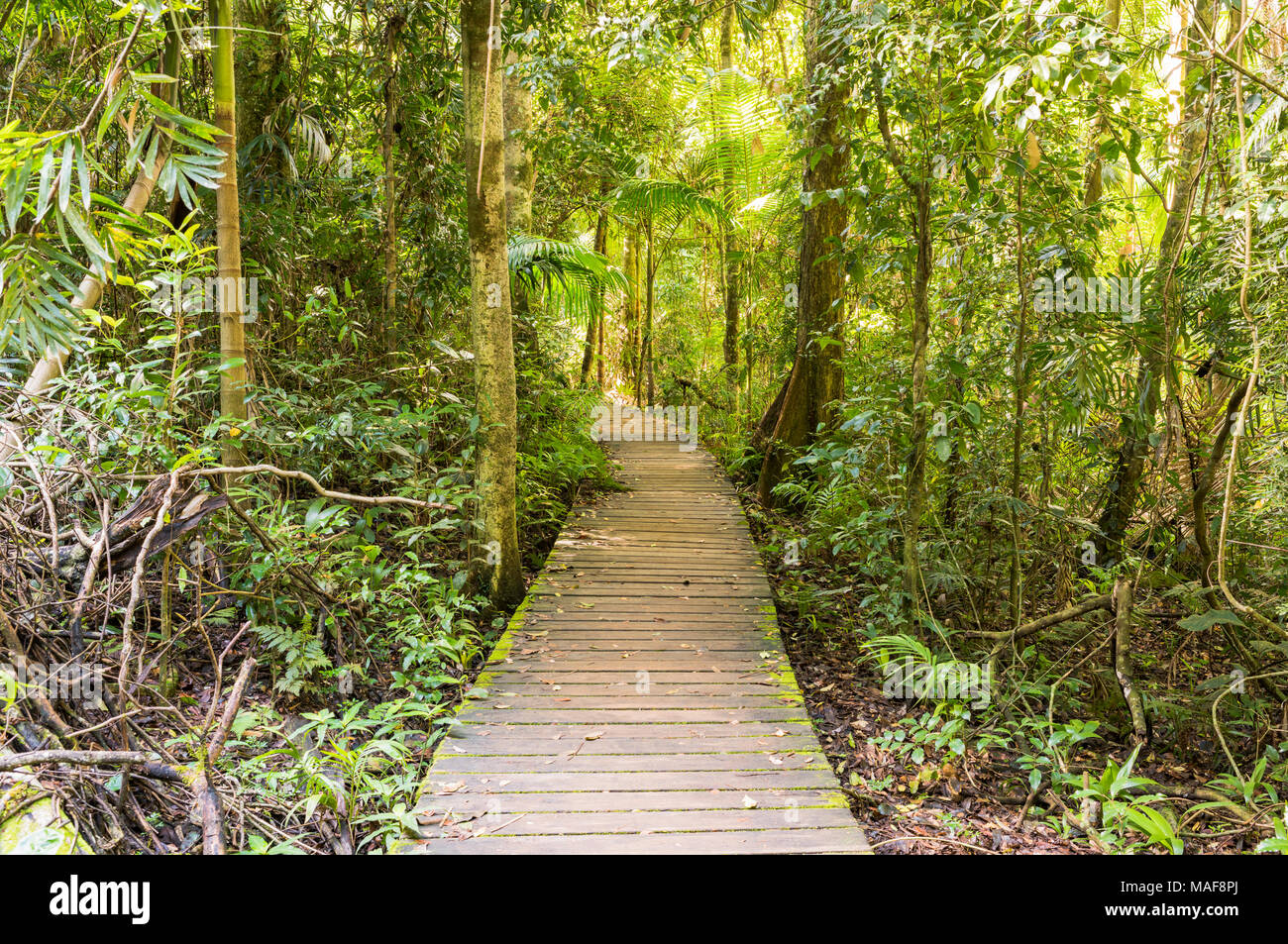 Maiala hiking area in the D'aguilar State Forest near Mount Glorious, Queensland, Australia - Stock Image