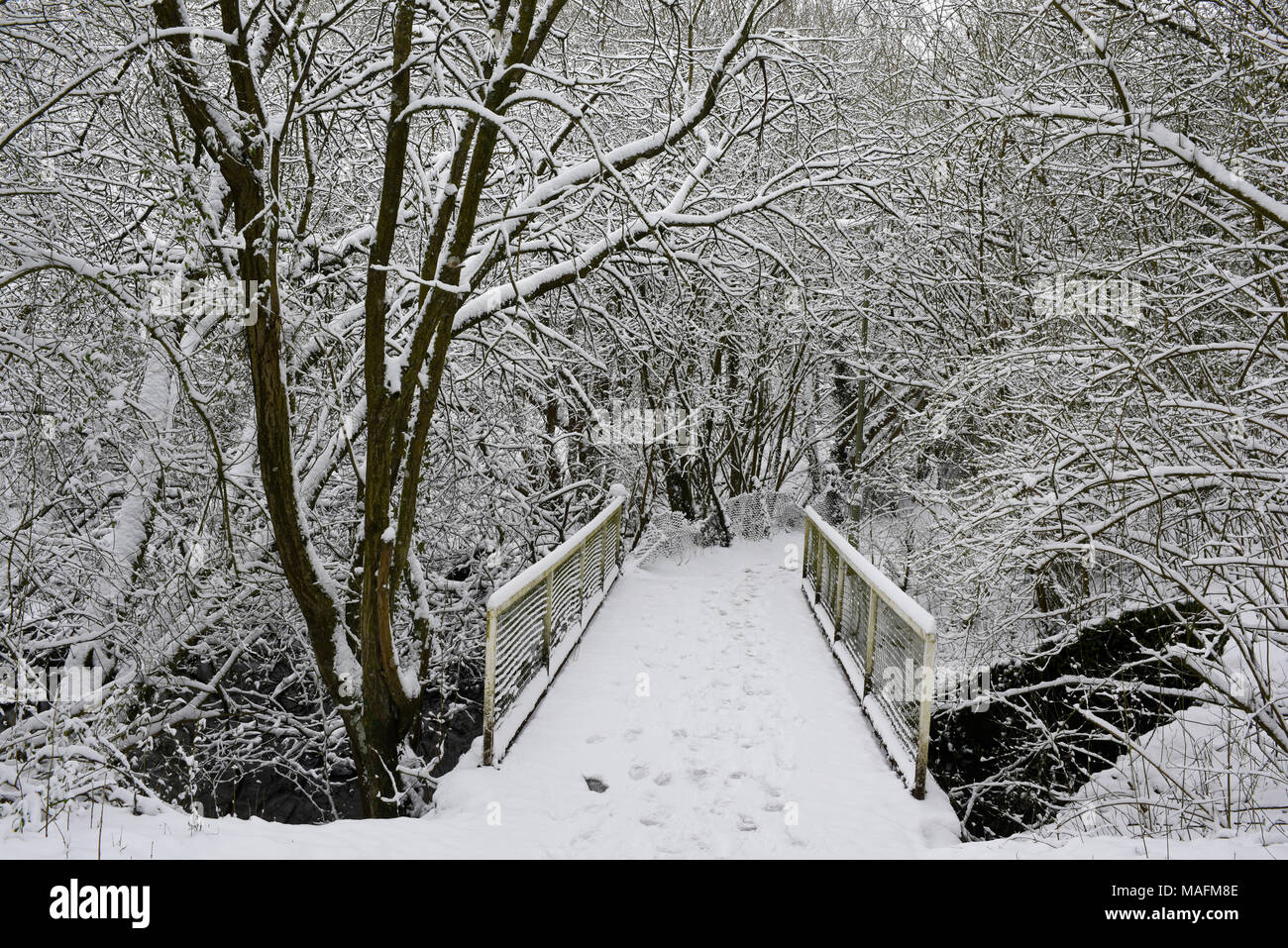 Snow covered bridge at Anton Lakes Nature Reserve in Andover, Hampshire, England - Stock Image