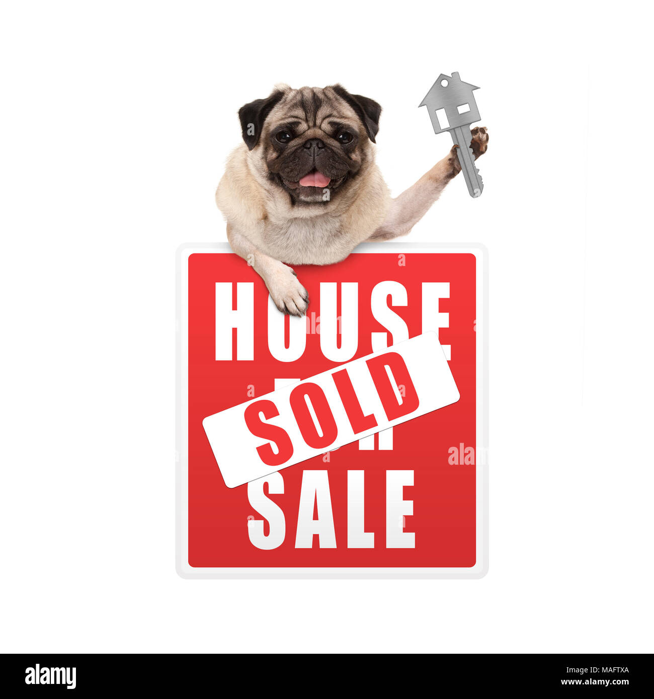 happy pug puppy dog hanging with paws on red house sold sign holding up house key, isolated on white background Stock Photo