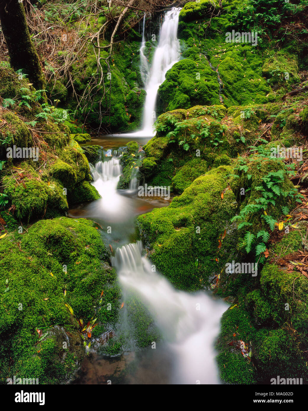 Moss Falls, Cataract Canyon, Mount Tamalpais, Marin County, California - Stock Image