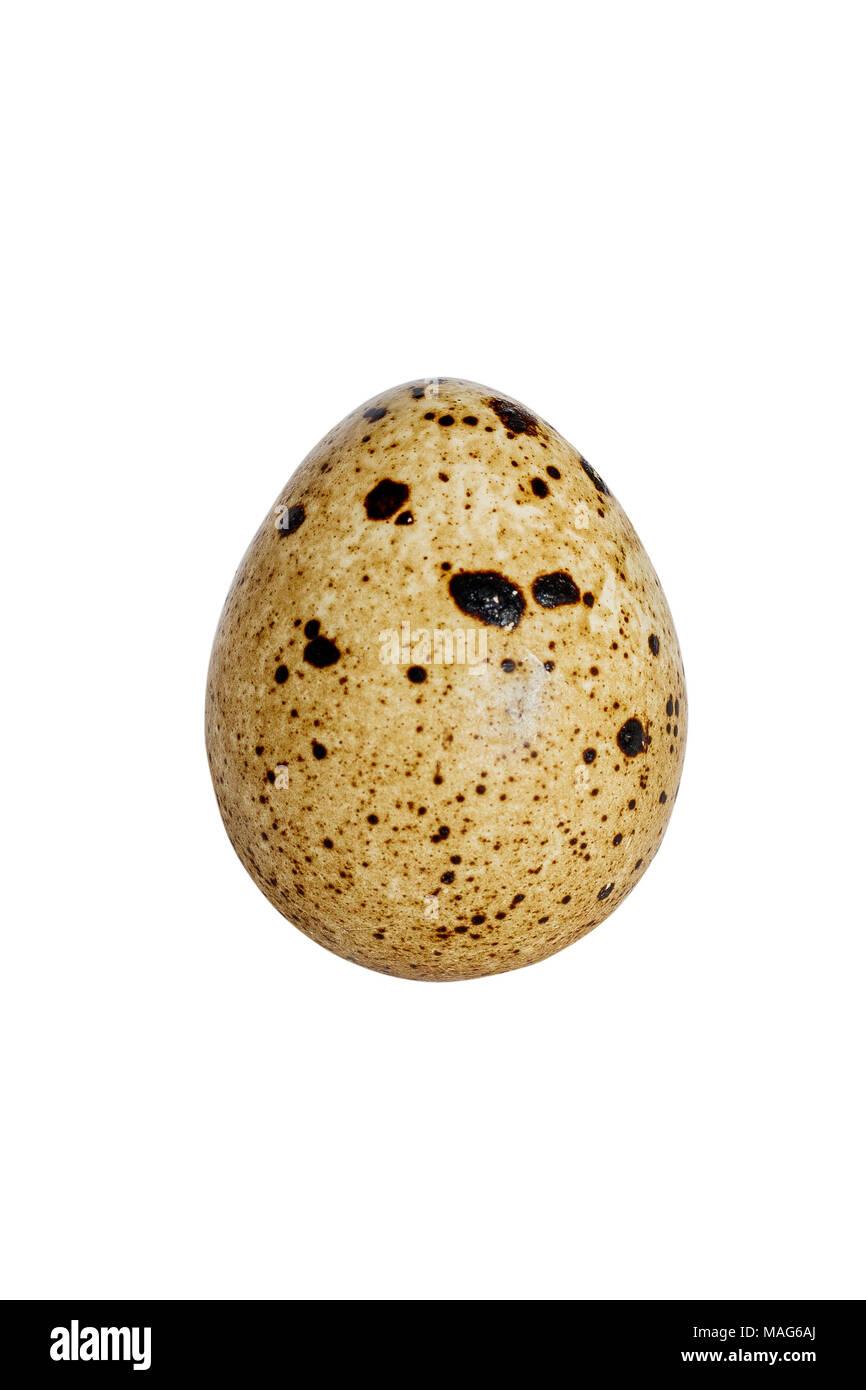 dietary quail egg - Stock Image