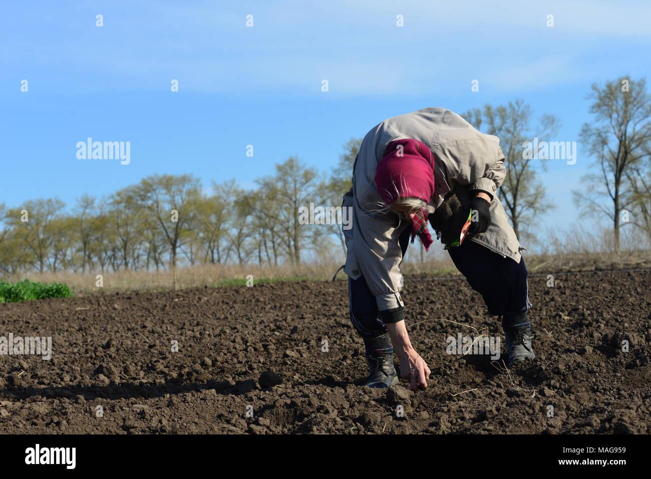 Spring season work at subsistence garden, Ukraine - Stock Image