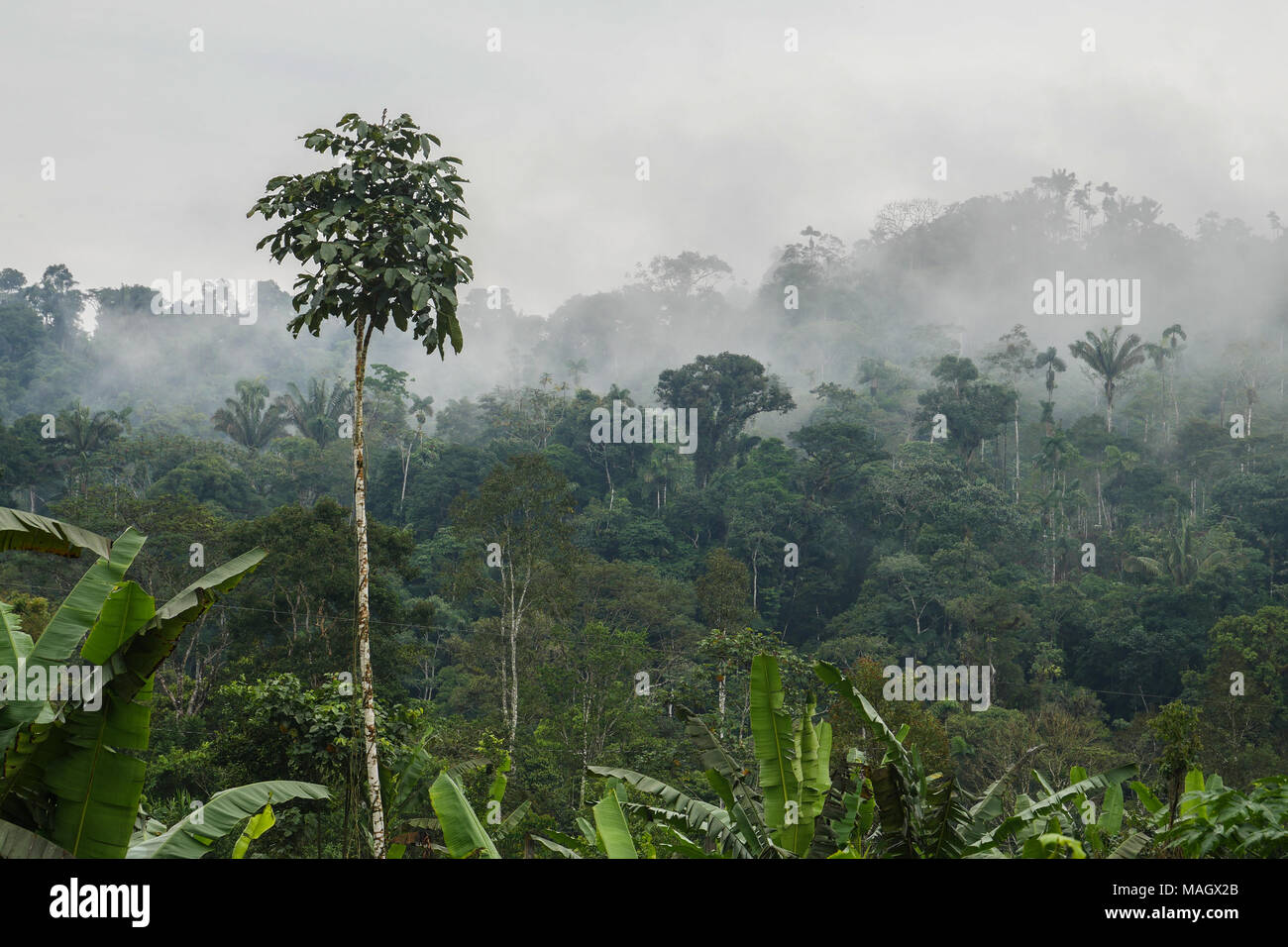 Morning view in Amazon - Stock Image