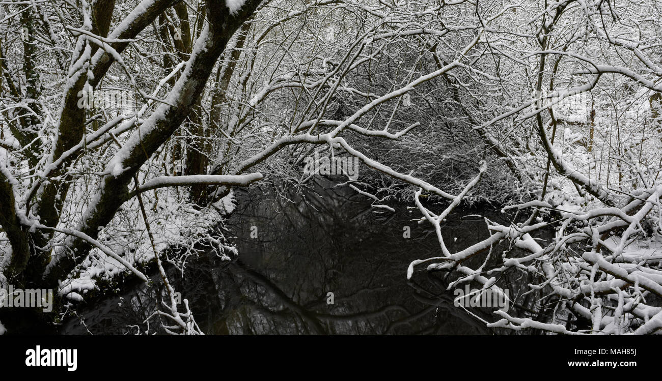 Snow covered branches at Anton Lakes Nature Reserve in Andover, Hampshire, England - Stock Image