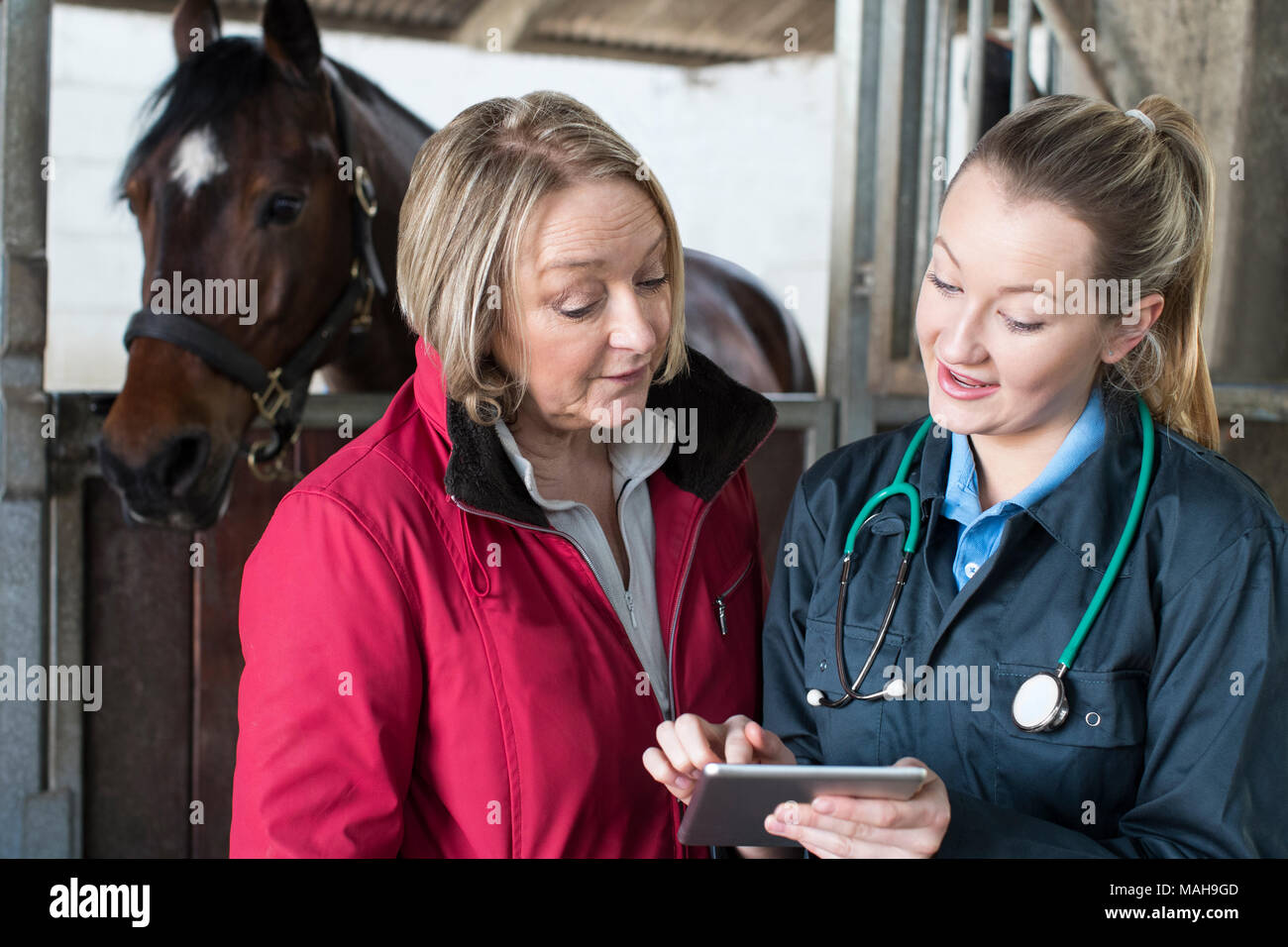 Female Vet Examining Horse In Stables Showing Owner Digital Tablet - Stock Image