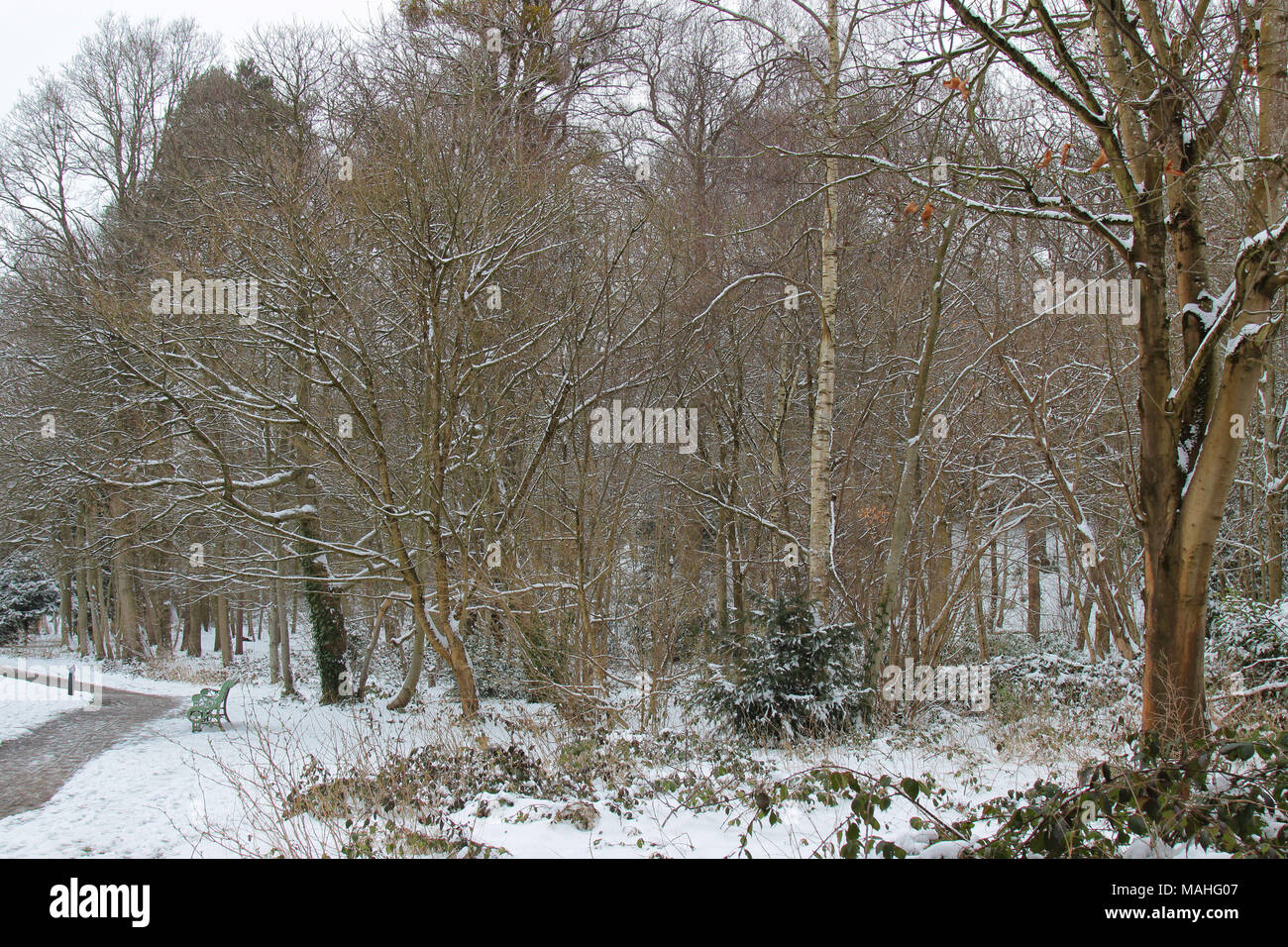 Landscape of snowy scen, South Hill Park, Bracknell, Berkshire, UK - Stock Image