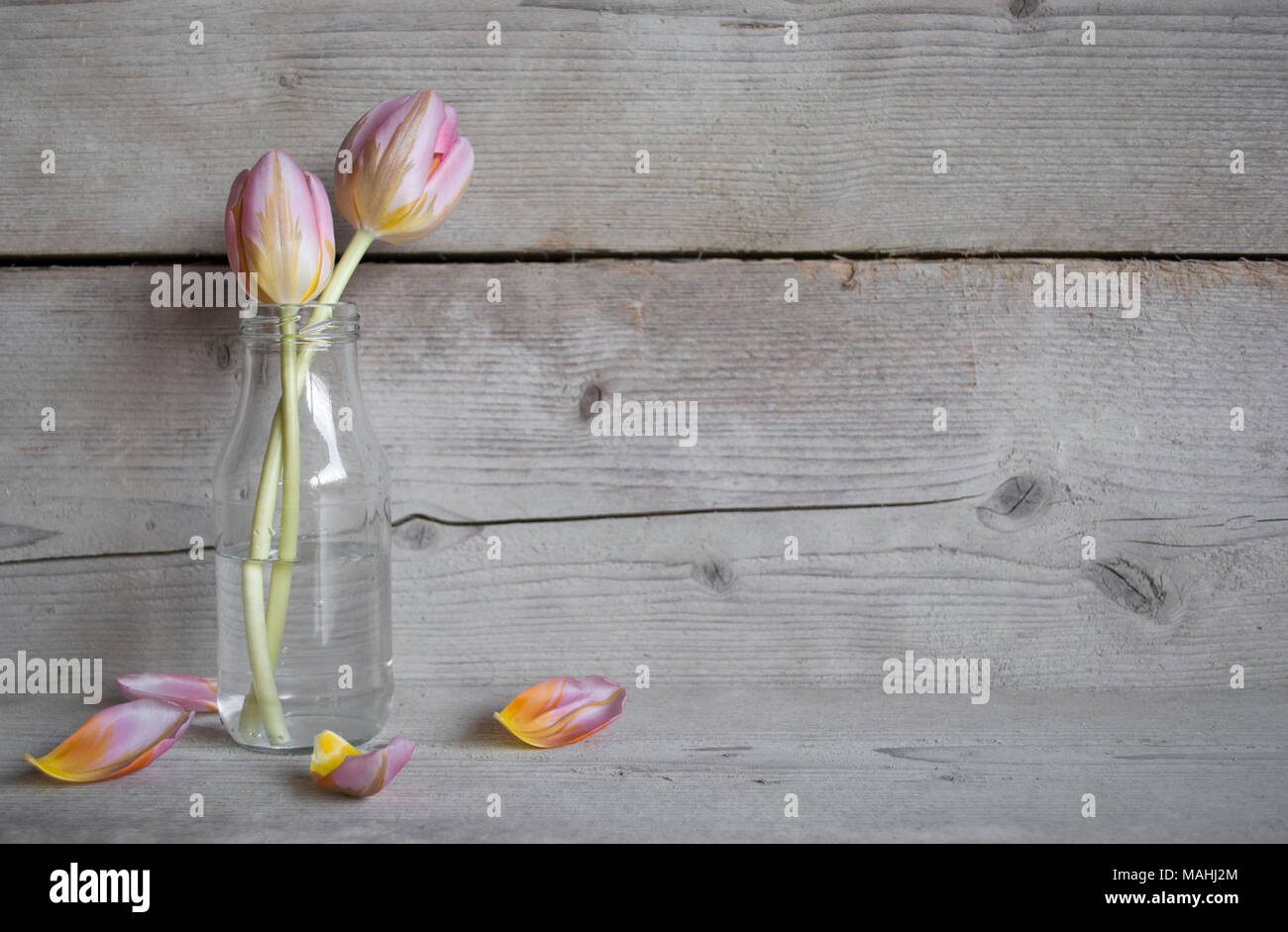 Pink tulips in glass bottle, on old wooden background with petals Stock Photo