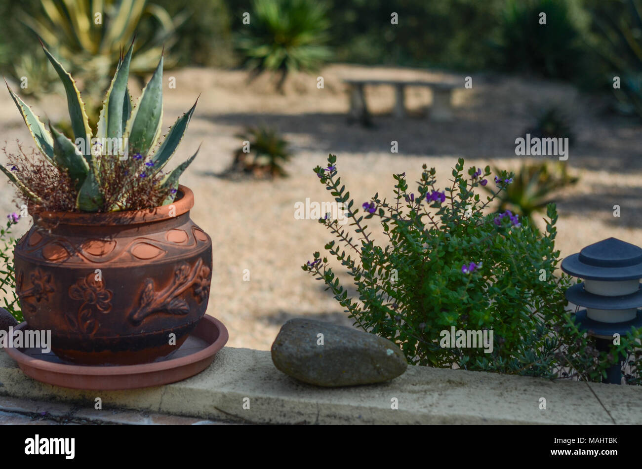 Spanish flowers and pot plants in a garden high up in the Girona hills of spain, yucca plants - Stock Image