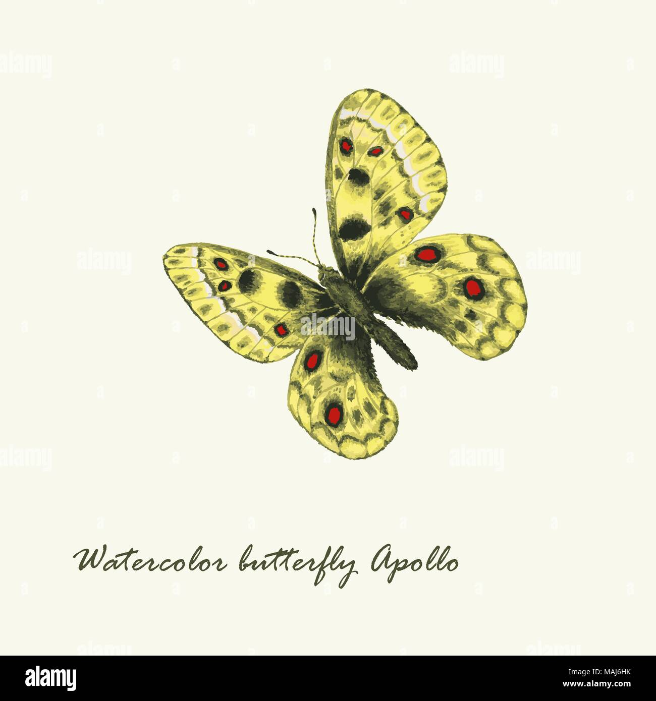 Vector watercolor butterfly. Parnassius apollo butterfly. Hand drawn illustration - Stock Vector