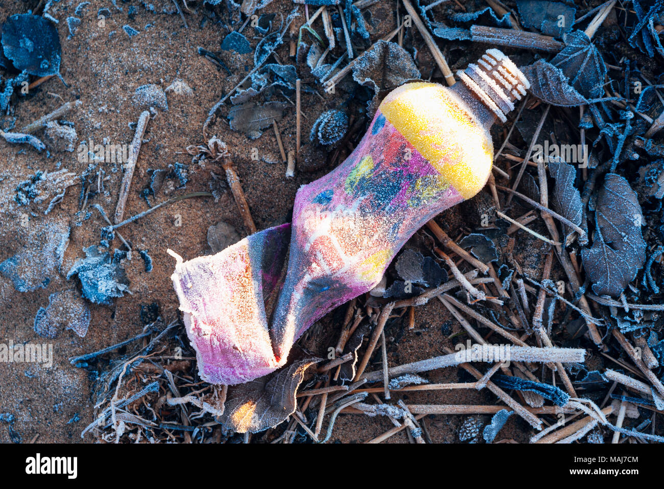 Litter covered in frost beside the River Ribble near Ribchester, Lancashire - Stock Image