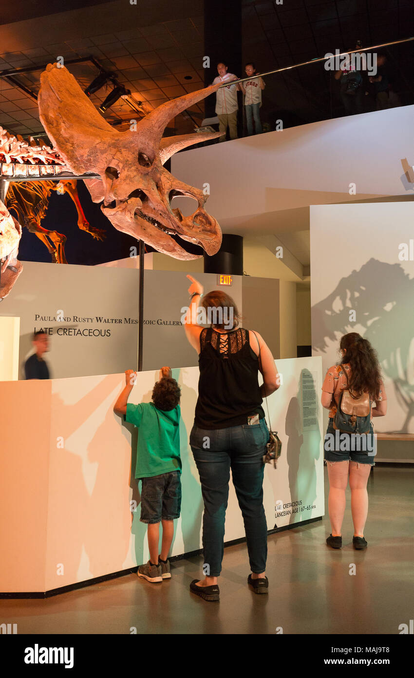 A family with children looking at a triceratops dinosaur skeleton fossil, in a dinosaur museum, USA - Stock Image