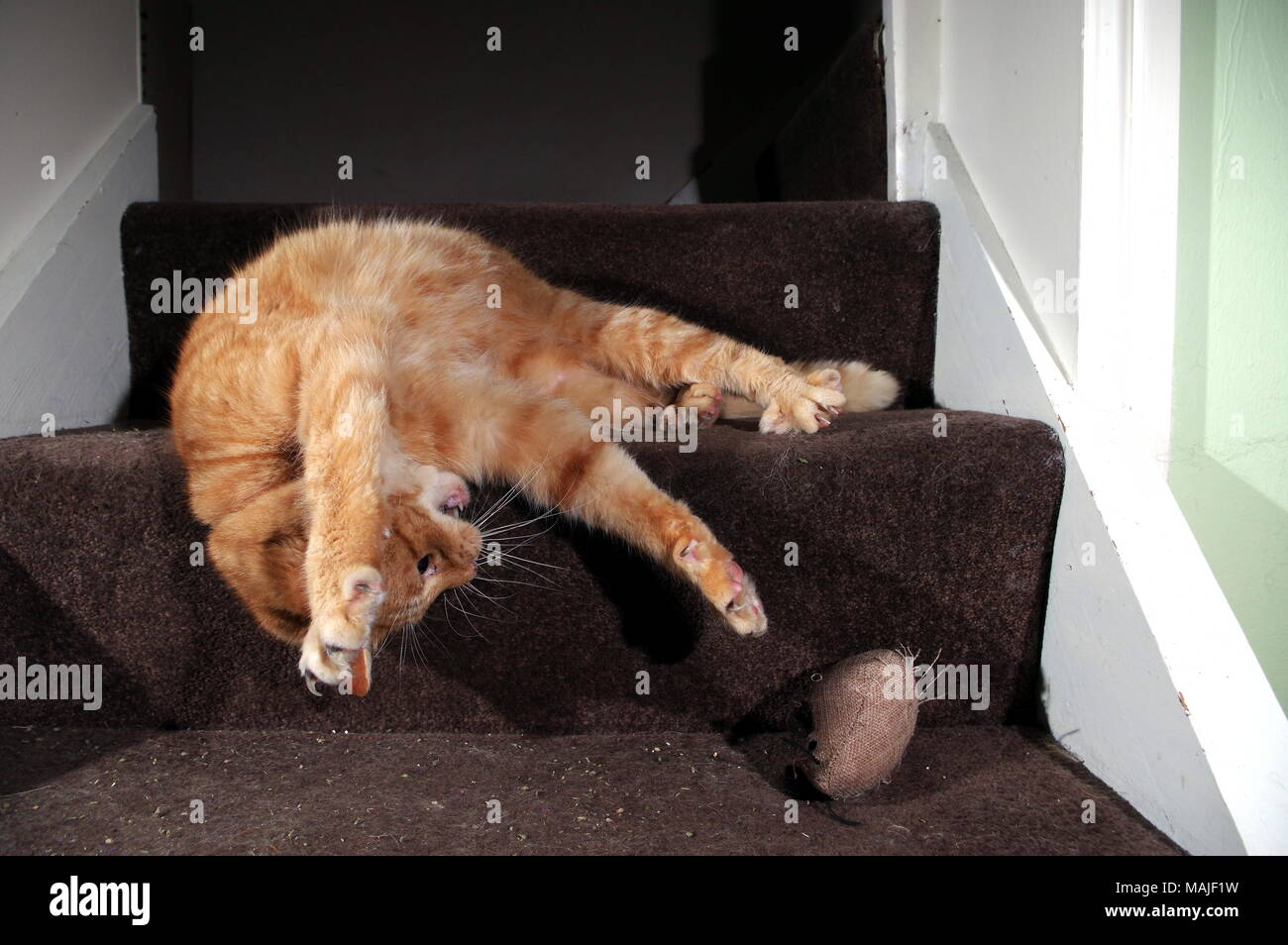 Ginger cat playing on stairs Stock Photo