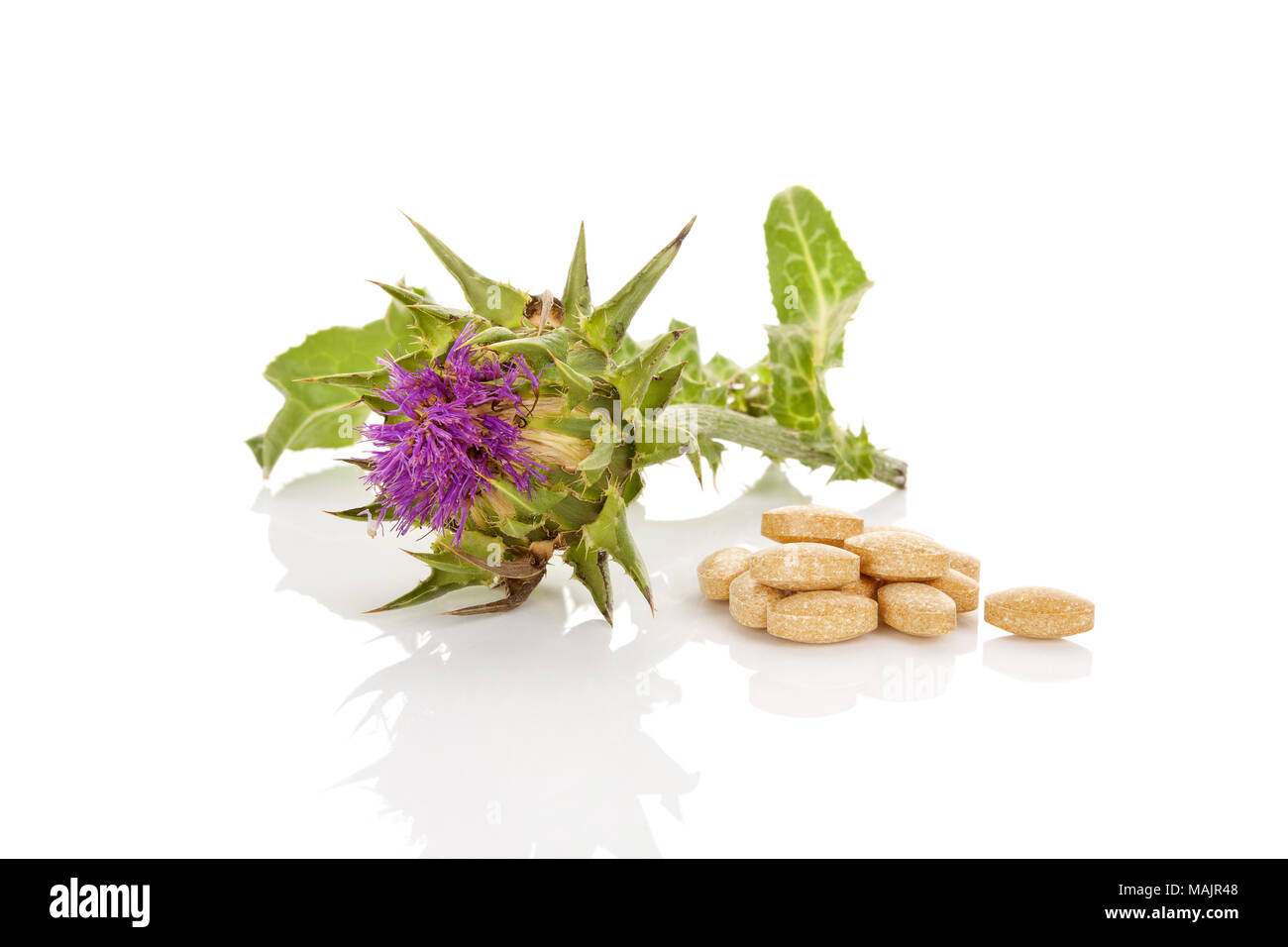 Milk Thistle natural remedy. Milk Thistle flower with nutrition supplement pills isolated on white background. - Stock Image
