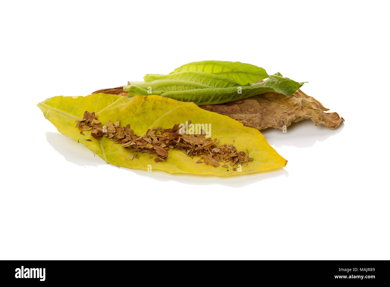 Fresh and dried tobacco leaves isolated on white background. - Stock Image