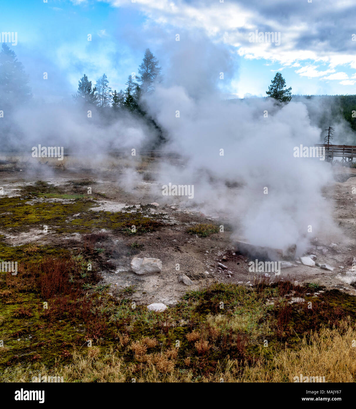 Hot steam and gas rising up out of the ground in clearing of rocks and dead grass in Yellowstone. - Stock Image