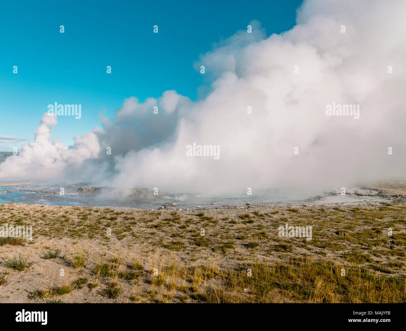 Geysers erupting in a lake of water with a field in the foreground and huge steam plumes against a blue sky. - Stock Image