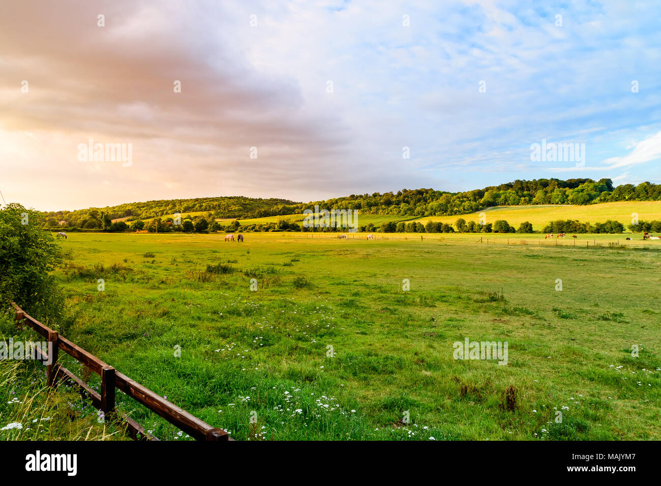 A summer evening in the Hambleden Valley in the Chilterns - Stock Image