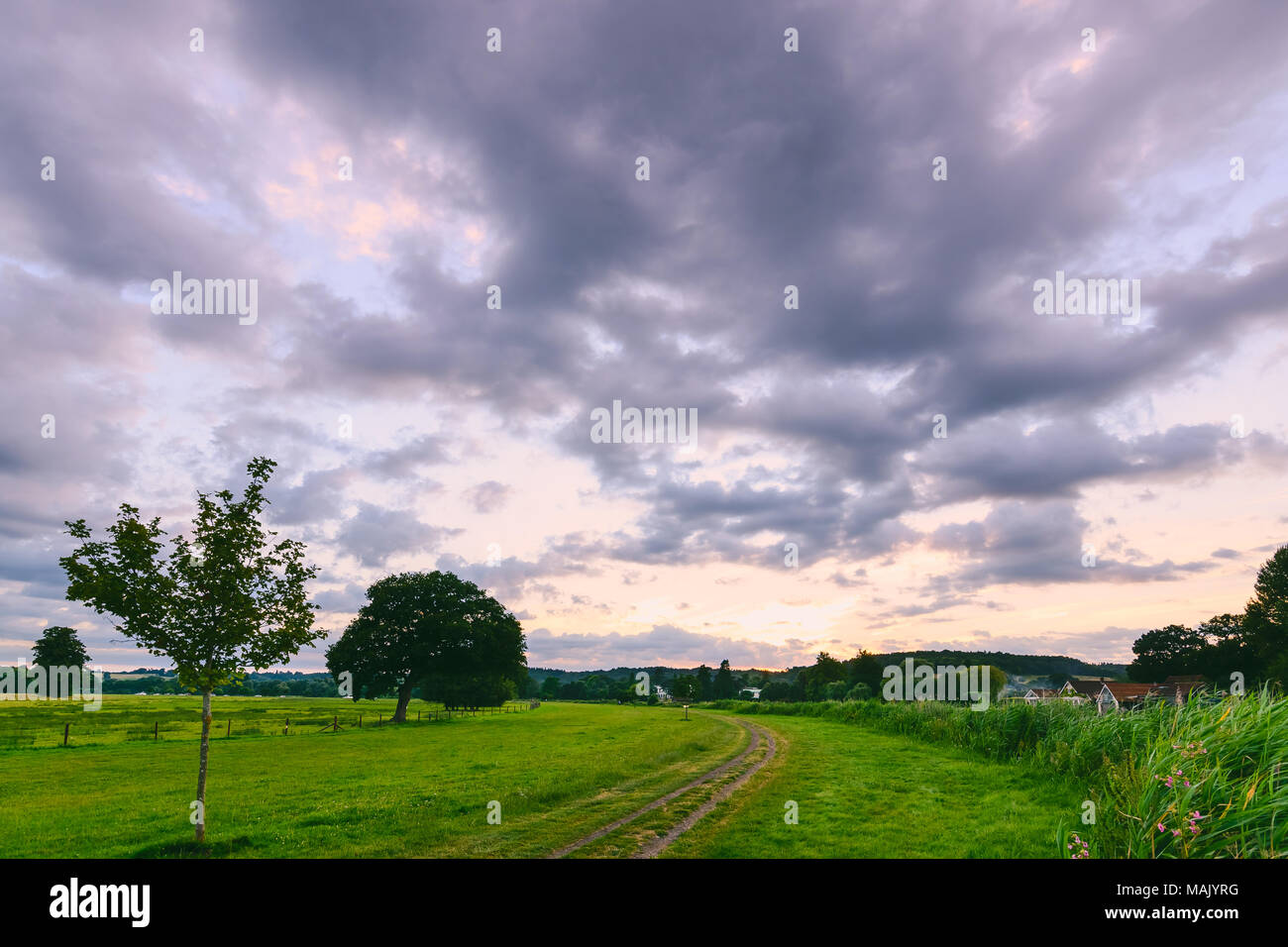 Summer evening in the fields by Hambeden Lock - Stock Image