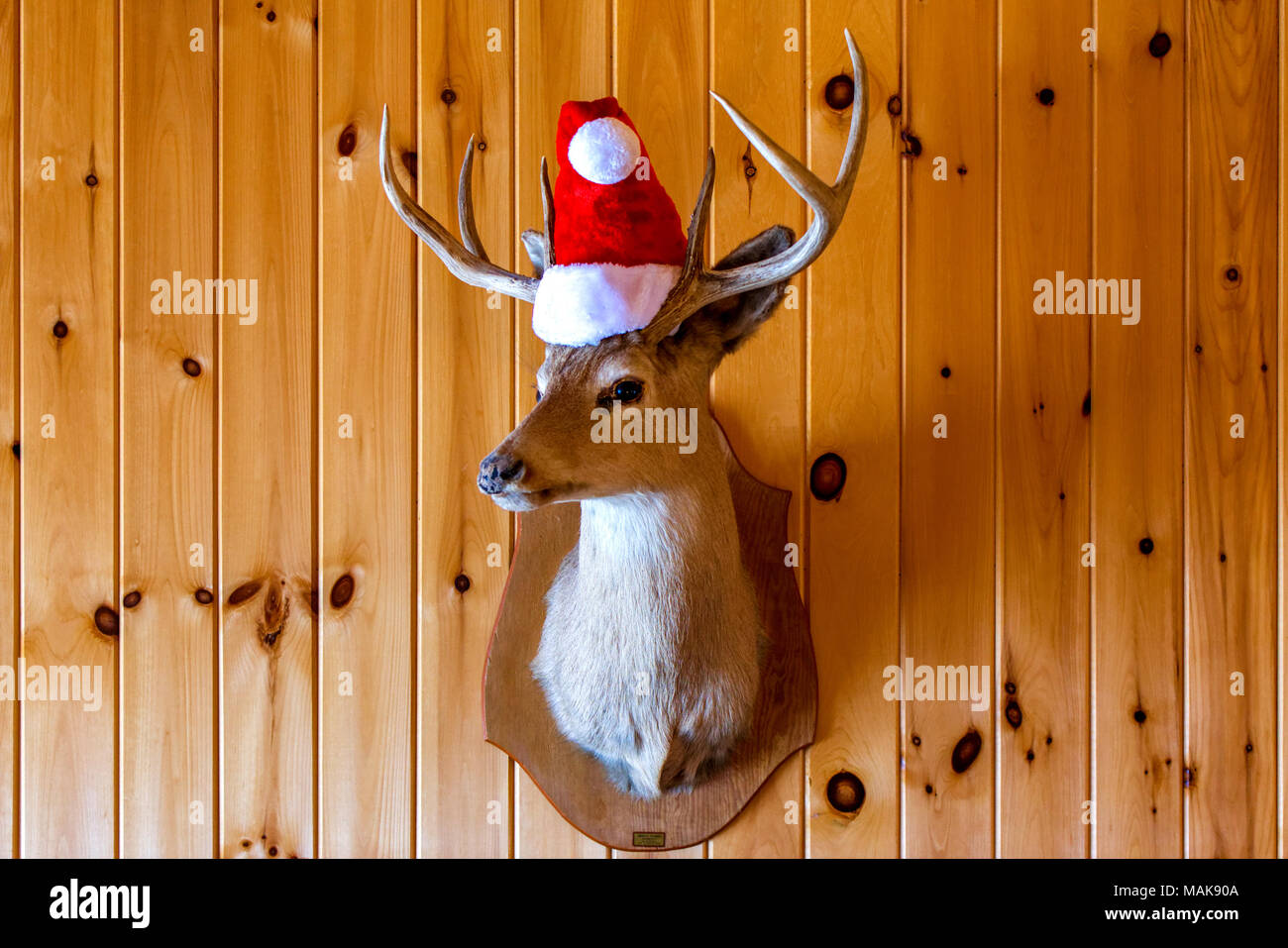 Funny deer with a Santa Claus hat - Stock Image