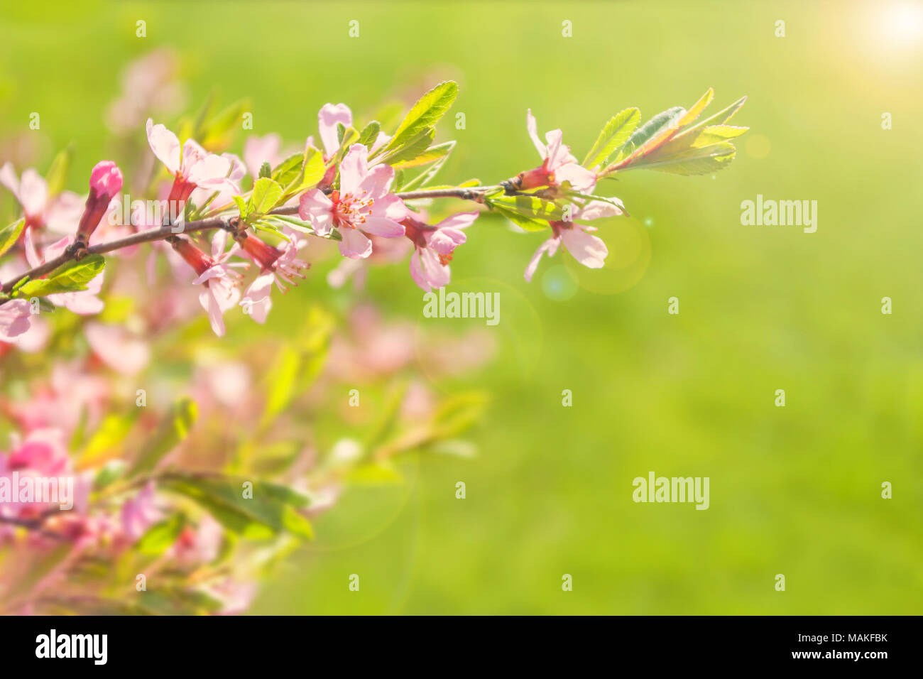 Beautiful Pink Flowers Against Green Grass With Sun Shining Stock