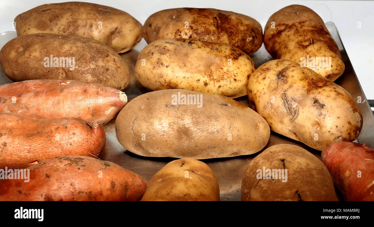 Russet and sweet potato on a metal tray - Stock Image