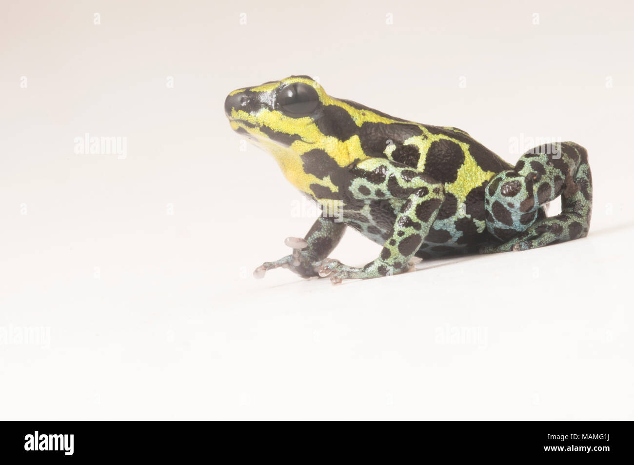 Frog Model Stock Photos & Frog Model Stock Images - Alamy