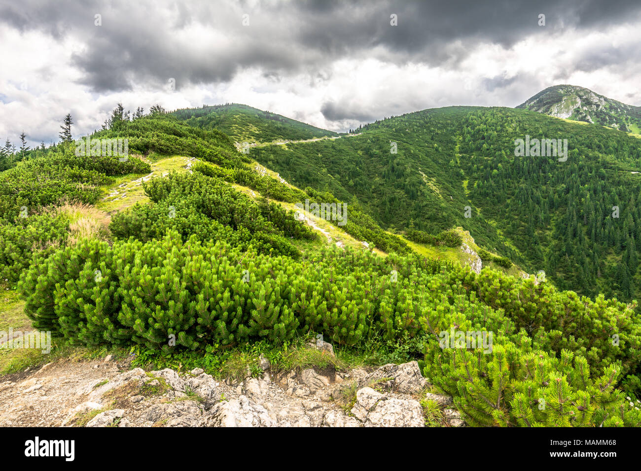 Green mountains landscape, hills covered forest Stock Photo
