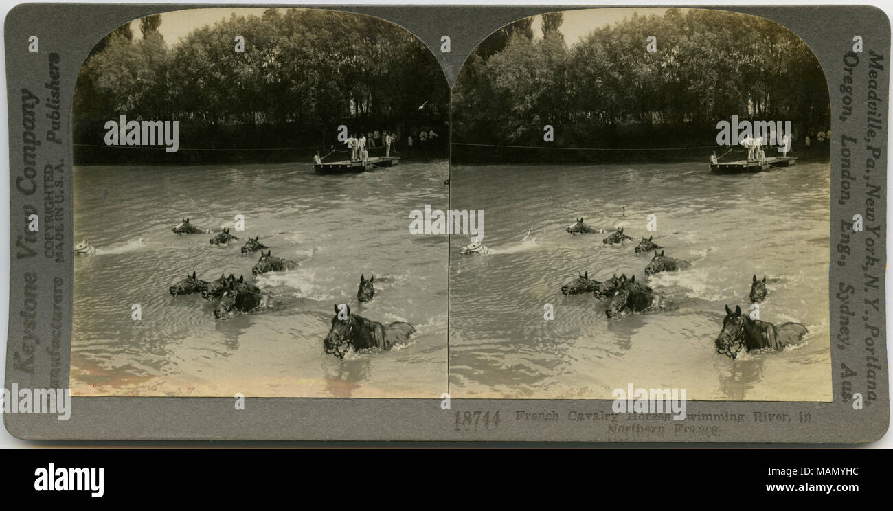 Horizontal, sepia stereocard showing group of horses swimming across river with men standing on shoreline in background. Keystone Stereograph number 18744. The title reads: 'French Cavalry Horses Swimming River in Northern France.' Title: 'French Cavalry Horses Swimming River.'  . between circa 1914 and circa 1918. Keystone View Company - Stock Image
