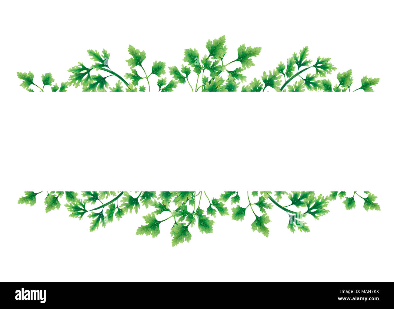 Green of parsley leaves at the borders - Stock Image