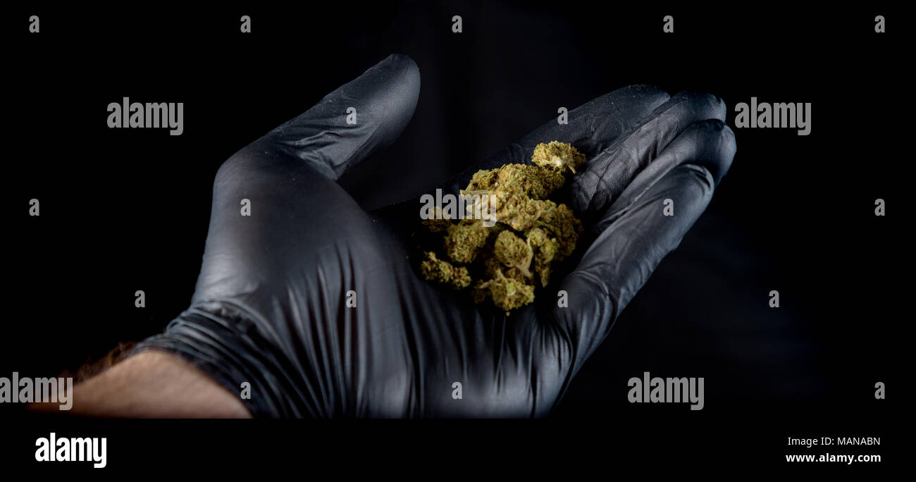A hand with a black latex glove holding a handful of fresh nugs.. Black background Stock Photo